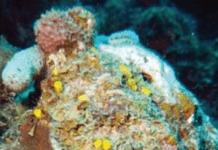 Influensia di hende ta stroba kresementu di koral