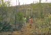 Parti di e programa di televishon di Boneiru Salvaguardando Naturalesa. Nerio Finies di manera orguyoso ta mustra e presentadó Julianka Clarenda e rutanan di kaminata rònt di Goto ku a krea komo parti di e proyekto di Fondo pa Naturalesa POP Bonaire.